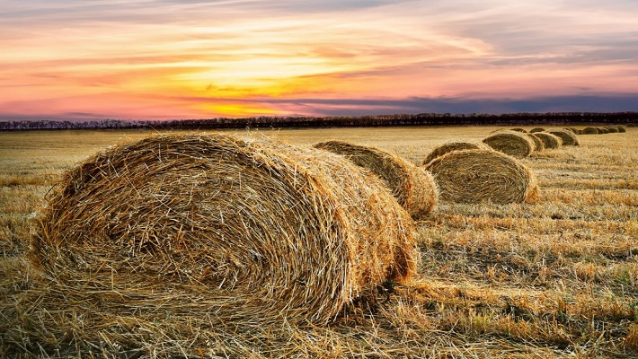 خرید زمین کشاورزی